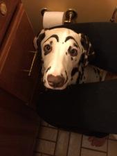 Do you like my eyebrows?